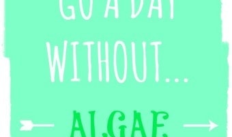 || My Love Affair with Algae || and how I won't go a day without it!