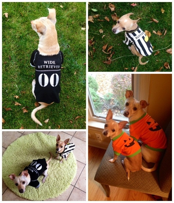 Dog Costume Collage